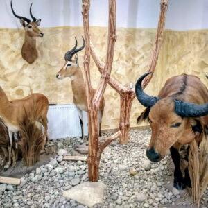 5 Muzeum Przyrodniczo-Łowieckie W Uzarzewie (fot. Piotr Basiński)