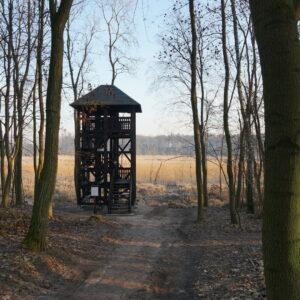 Wieża Ornitologiczna Na Trzcielińskim Bagnie (fot. Beata Gerlof)